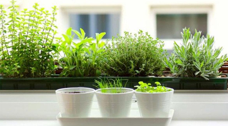 باغچه سبزی